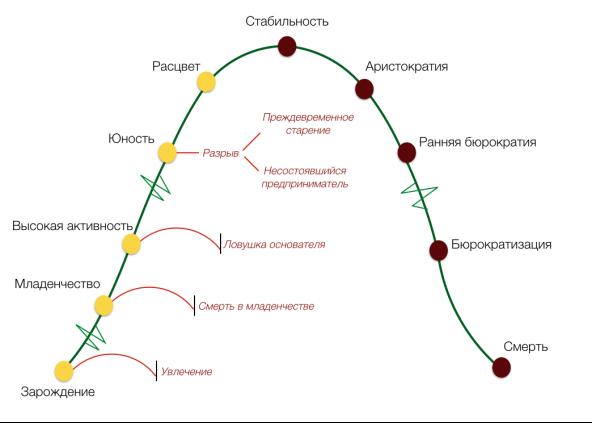 http://powerbranding.ru/wp-content/uploads/2014/07/adizes-olc-model.png