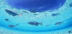 океан, вода, рыбы, природа