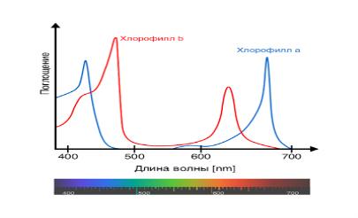http://2.bp.blogspot.com/-12A8kzs50rk/UjIBYEwy6II/AAAAAAAAADQ/C0Q3b0HmNcU/s400/Chlorophyll_ab_spectra-en.png