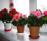 Картинки по запросу комнатные цветы