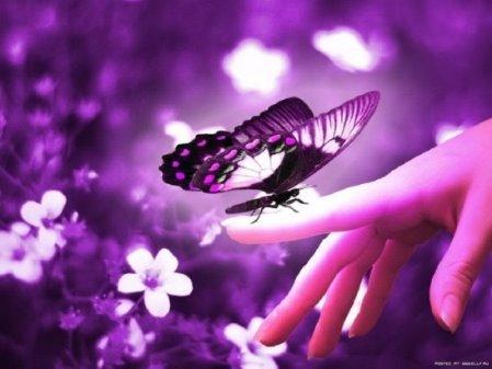 Картинки по запросу бабочки цветные крылья расписные