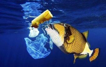 Пластик в океане, или как человек разрушает природу