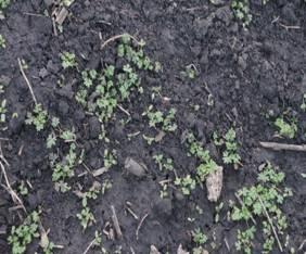 поле после осенней пахоты весной