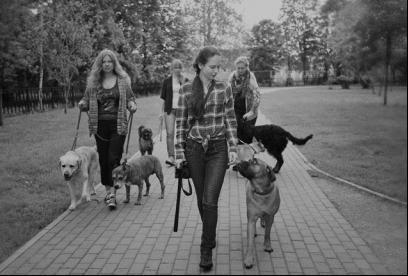 http://myfreinds-dogs.ru/wp-content/uploads/2015/11/vygul_sobak.jpg