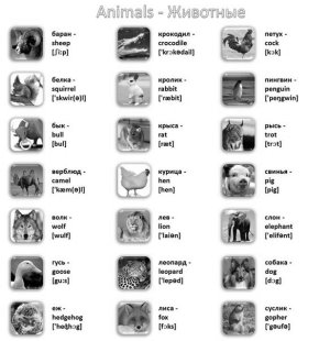 Картинки по запросу лексика животные