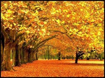 Сыплется с деревьев золото и медь.jpg