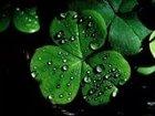 национальный символ северной ирландии фото
