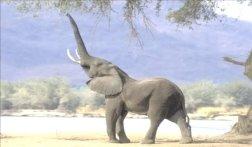 Afrikanskie-slony3