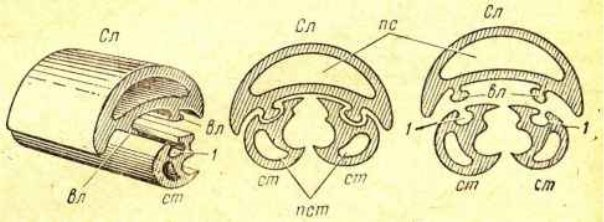 Рис.43. Соединение стилетиков с салазками: Сл-салазки; cт—стилетики; вл—валик салазок;     1—выемка в стилетике; пс—полость салазок; пст—полость стилетика