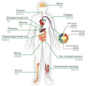 рН в организме человека