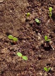 Через 3 недели появились первые ростки