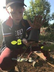 Высадка растения в открытый грунт Рис. 9. Полив растения