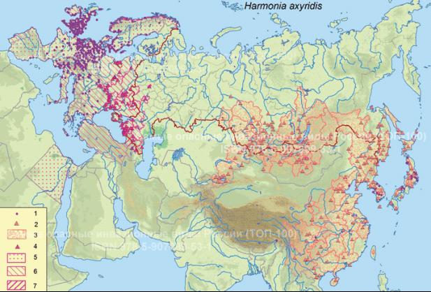 Распространение Harmonia axyridis в Евразии и на севере Африки. © Проект РНФ, № 16–14–10323 (Рук. В. Г. Петросян), ИПЭЭ РАН: 1 — места обнаружения по GBIF (https://doi.org/10.15468/dl.tkukh7, https://www.gbif.org/occurrence/download/0095237–160910150852091). Нативная часть ареала: 2 — места находок по Орловой-Беньковской, 2015; 3 — административные области (края, аймаки, провинции), в которых вид обнаружен. Инвазионная часть: 4 — места обнаружения по Орловой-Беньковской, 2013; 2014. Страны (в Китае — провинции, в России — области, края, республики), где распространена: 5 — локально, 6 — присутствует, 7 — широко