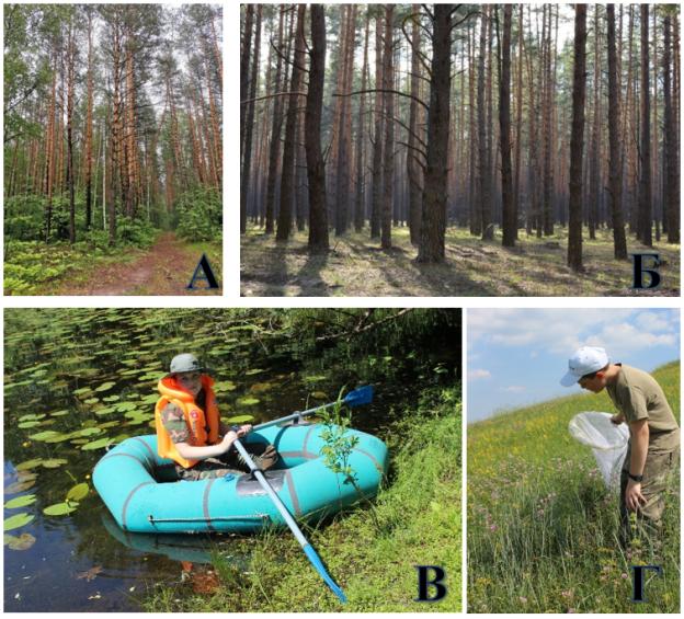 Фото биотопов: А — смешанный лес, Б — сосновый лес, В — берег озера и Г — луг