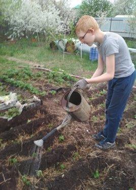 Полив посаженных растений