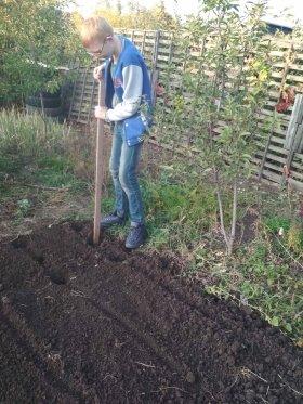 Подготовка лунок для посадки земляники